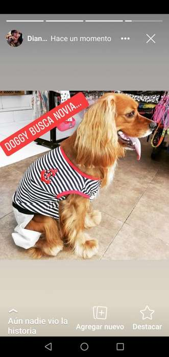 Doggy busca novia