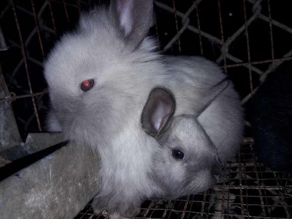 Se Vende Conejitos para Mascota