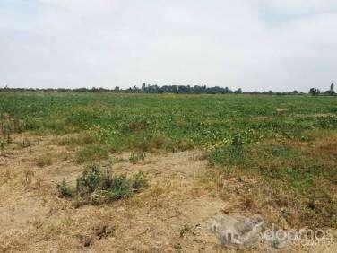 VENTA de Terreno agrícola 13.67 has. Chincha , Grocio Prado, Chincha