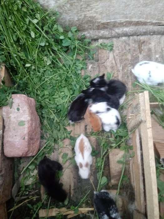 Sevende Conejos Cabeza de Leon a 10 /s