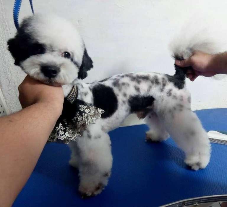 Curso basico de peluqueria canina en tulua