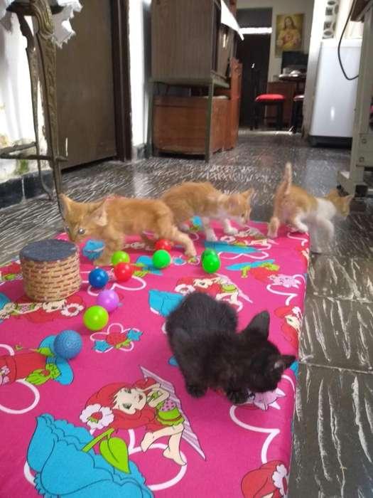 Adopta gatitos