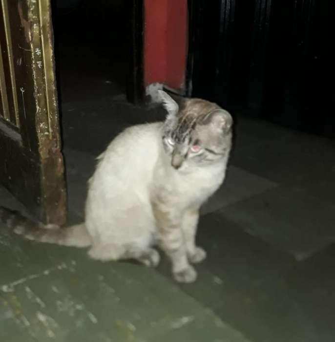 Doy en Adopcion Lindo <strong>gato</strong>