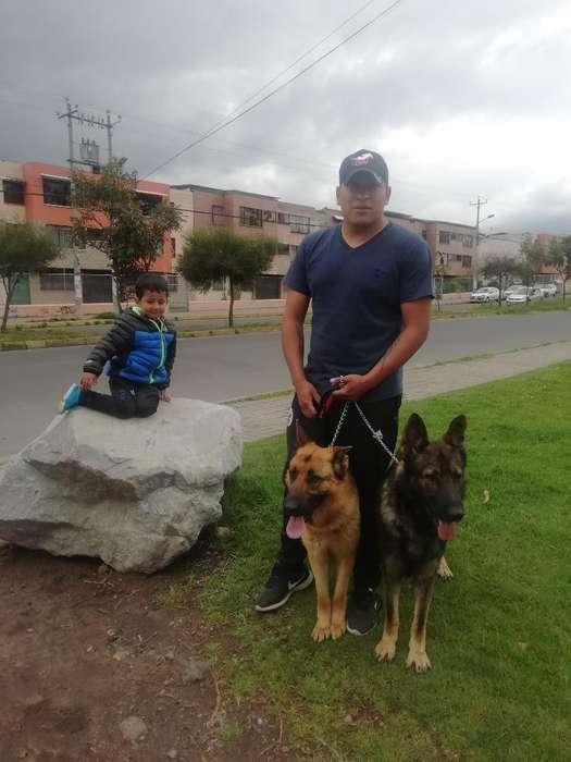 Cachorros Pastor Alemán #0963055365