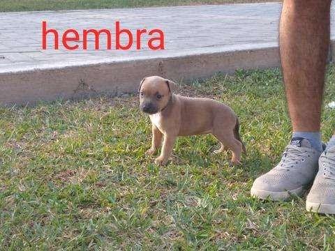 HERMOSOS <strong>cachorro</strong>S FUSION