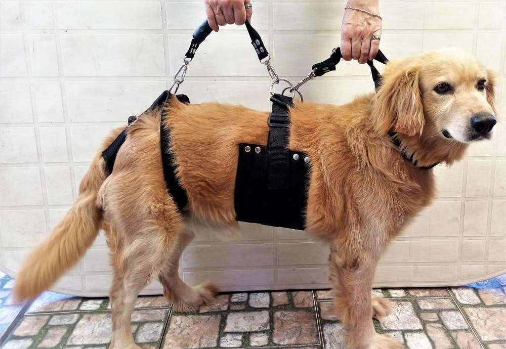 Arnes Perros Ayuda/ Recuperacion P/ Perros C/ Displasia Cadera