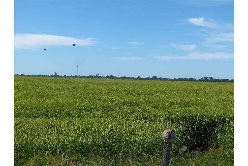 Vende <strong>campo</strong> Arrocero de 1.300 ha