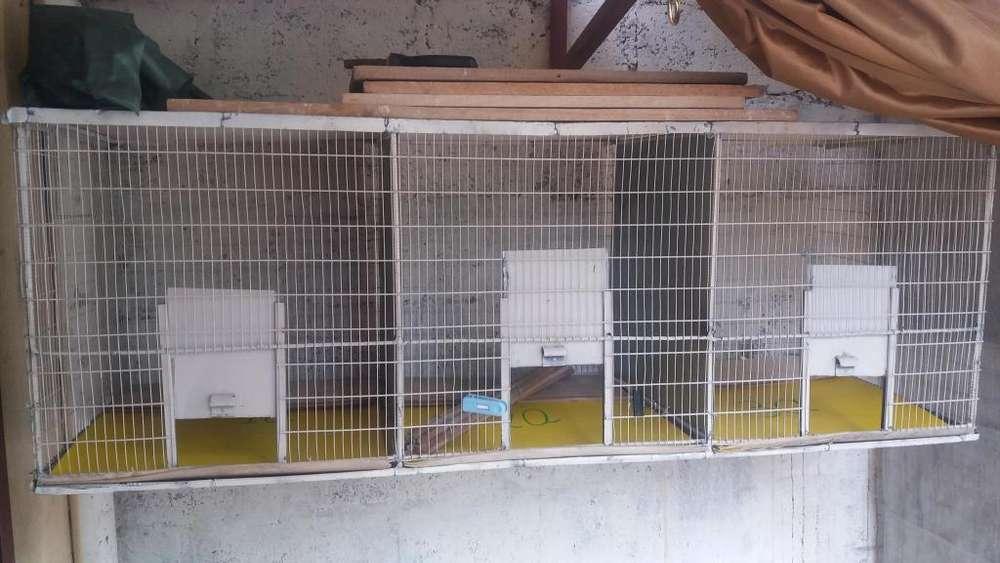 Venta en promocin de <strong>jaula</strong>s para reproduccin de canarios