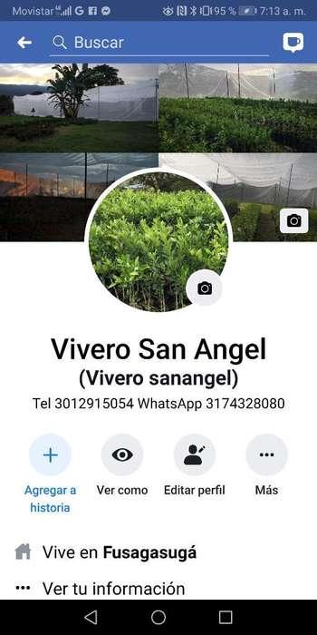 Vivero Sanangel.