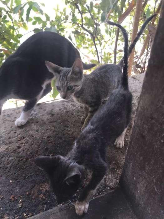 Regalo <strong>gato</strong>s Pequeños Cazadores