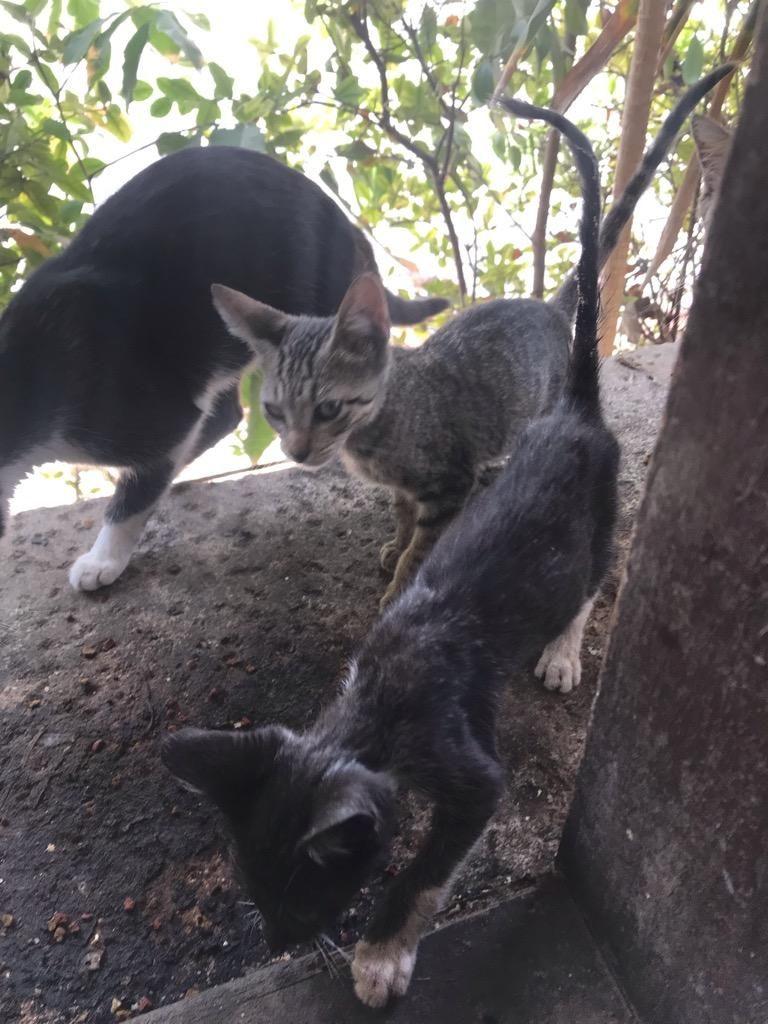Regalo Gatos Pequeños Cazadores