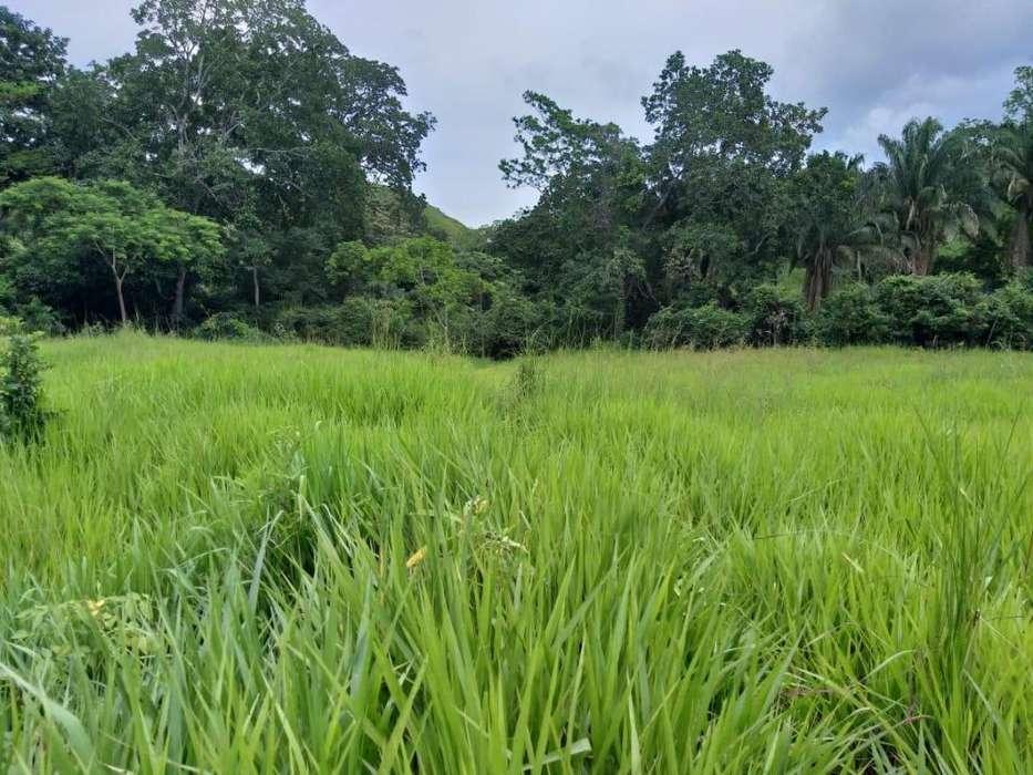 Se vende finca ganadera ubicada en Alvarado (vereda Hatico – Tamarindo) – Tolima,364 hectáreas
