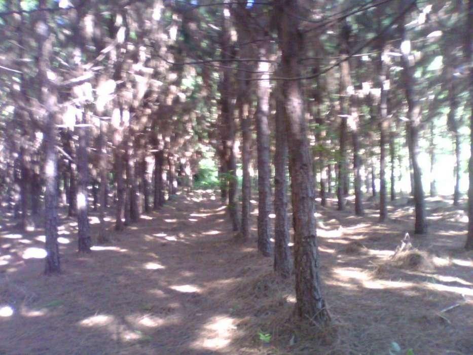 Campo, <strong>chacra</strong> de 21 hectáreas de uso mixto.