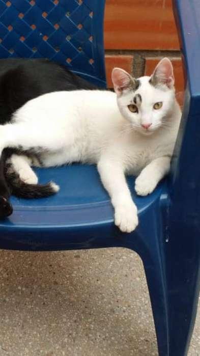 Lindo Gatito en Adopcion