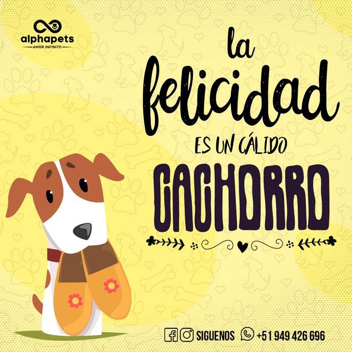 CACHORROS PASTOR ALEMAN BEAGLE LABRADOR PUG CARLINO HUSKY SIBERIANO CHIHUAHUA BICHON FRISE ALPHA PETS