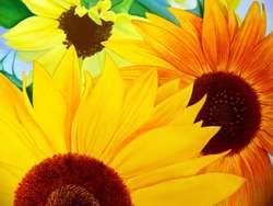 Cuadros Tripticos Polípticos Decorativos pintados a mano acrílico oleo Florales Girasoles