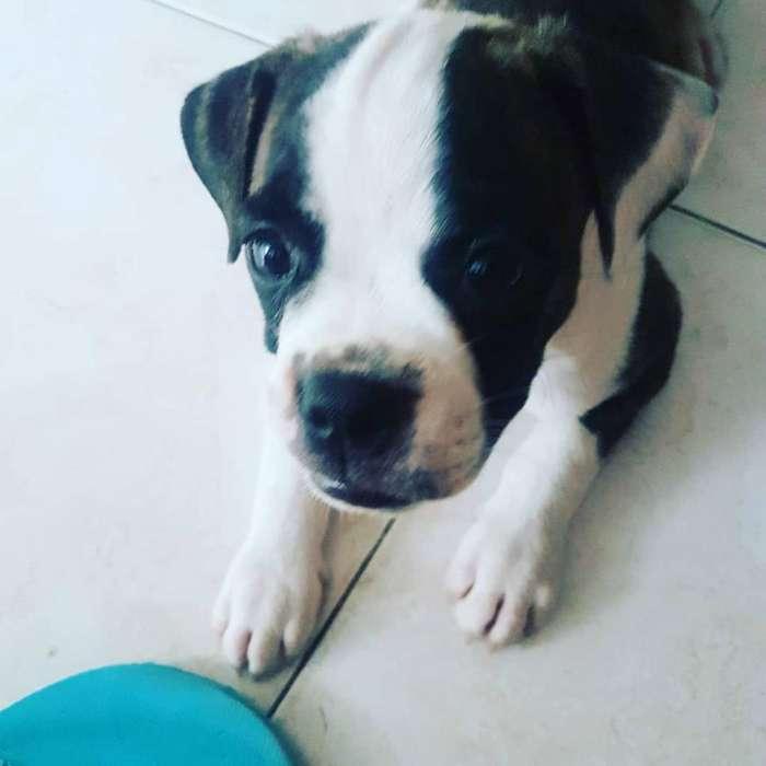 Cachorro Macho Dos Meses