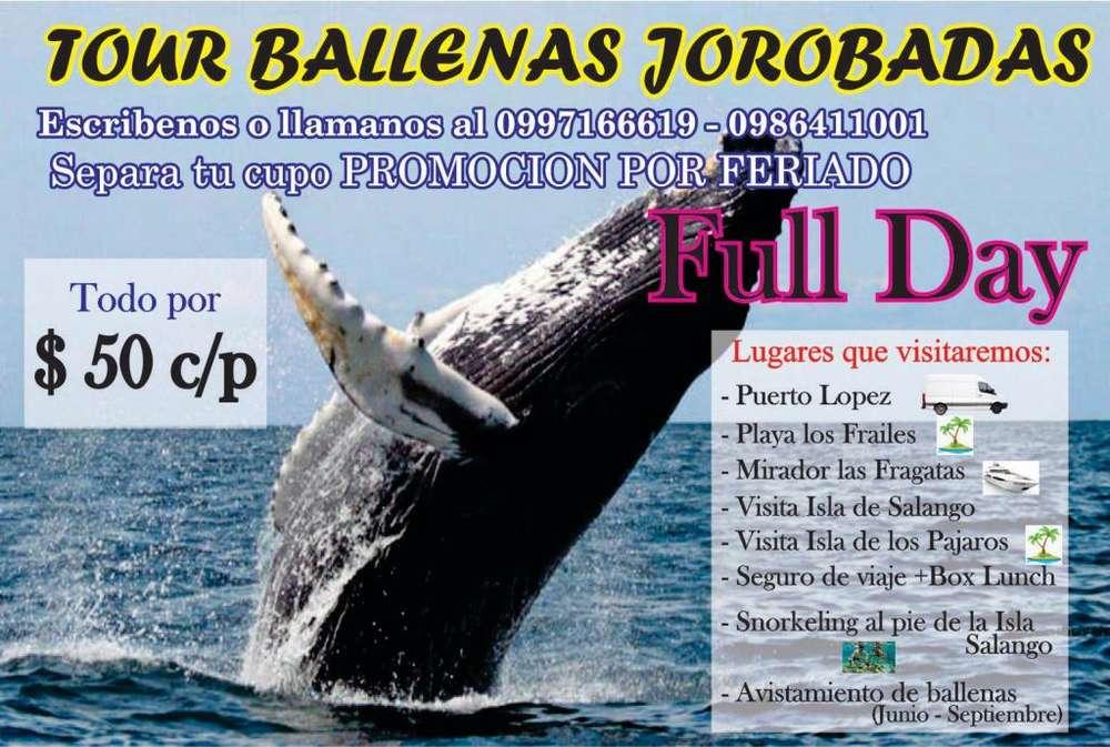 Tour para el avistamiento de las ballenas jorobadas
