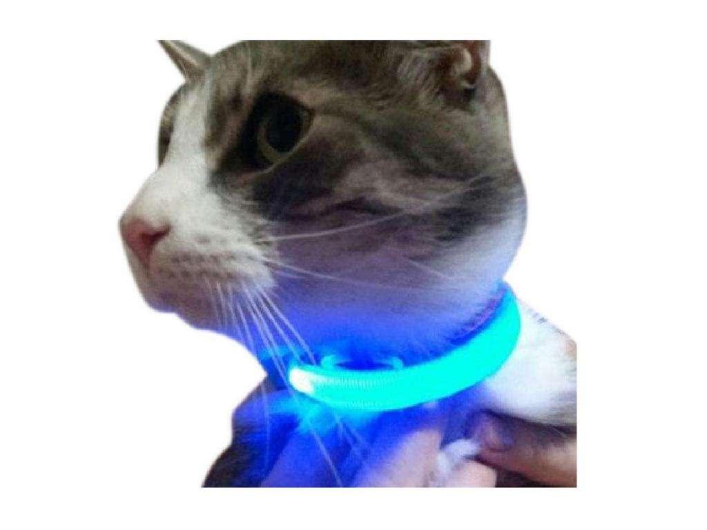 Collar Ledluz para Mascotas