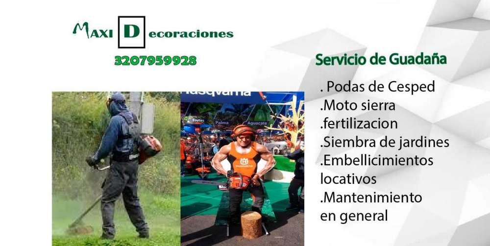Servicio de Jardineria Corteguadaña motosierra,siembras ,INSTALACIONDE GRAMAS Y AREASVERDES,CERCAS VIVAS