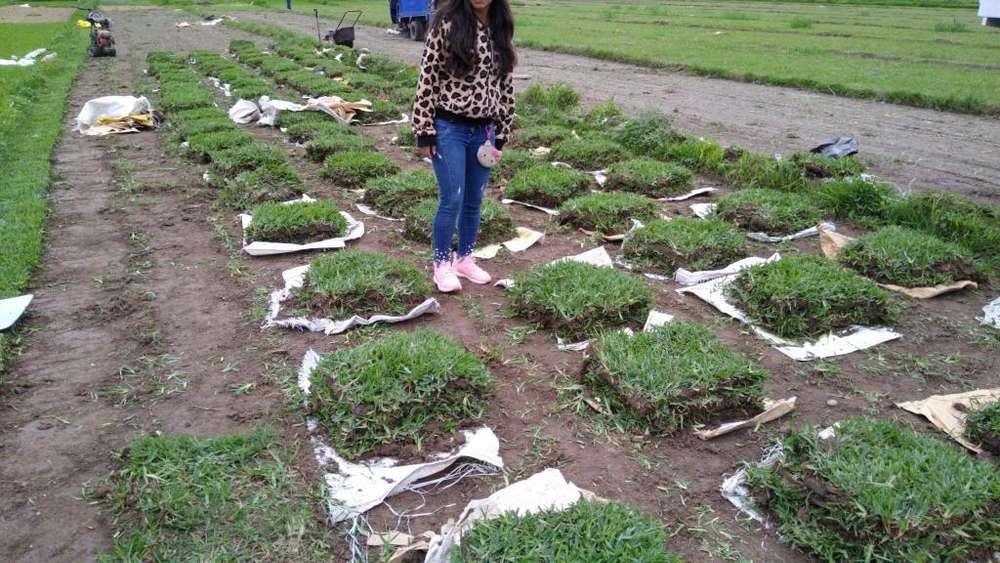 Grass Cel 957330250