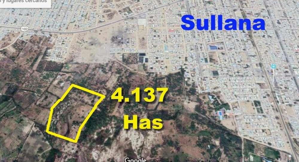 Vendo 4 hectáreas en Sullana