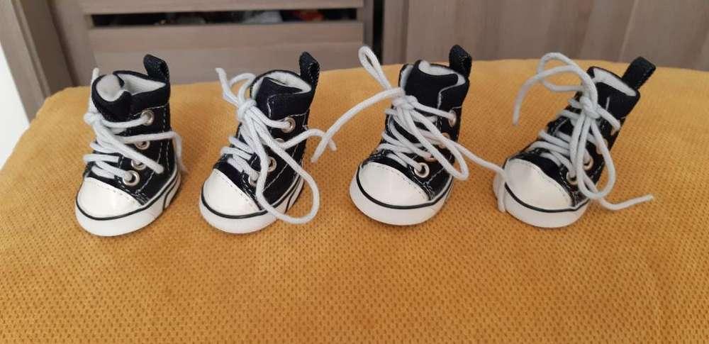 Zapatos Mascota