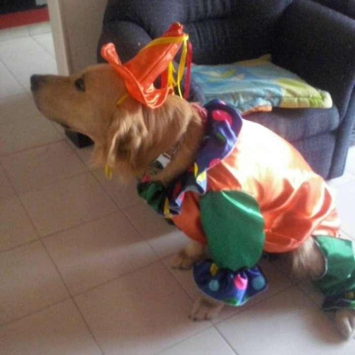 Disfraz de payaso para perro cel 3148206141