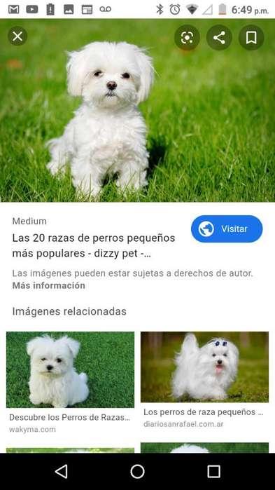 Busco Perro en Adopción Pasto