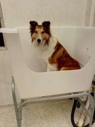 Equipamiento Peluquería Canina Y Felina