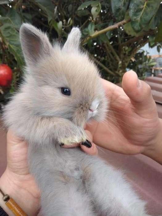 Conejos Cabeza de Leòn