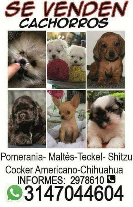 Mascotas Doggy Te Ofrece