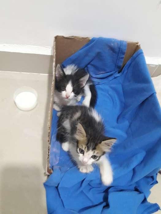 <strong>gatito</strong>s Rescatados en Adopcion