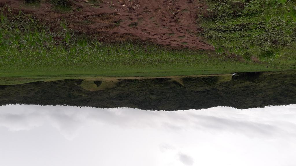 TERRENO agrícola en TARAPOTO-VENDO
