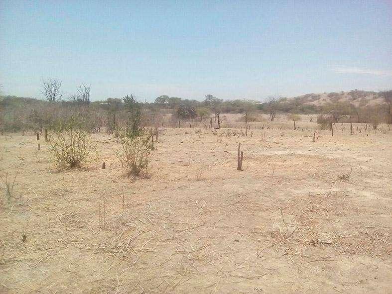 Vendo terreno agricola. Sector Somate. San Lorenzo. Sullana. Piura