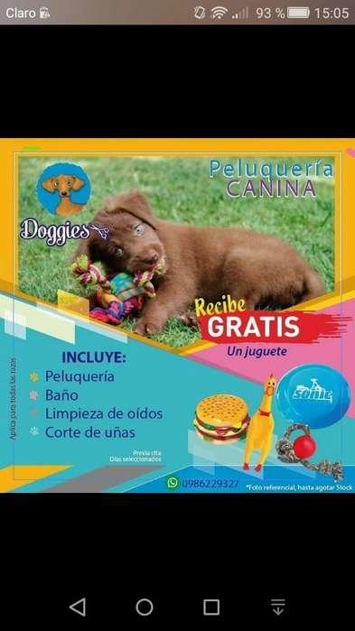 Promo Peluquería Canina (juguete Gratis)