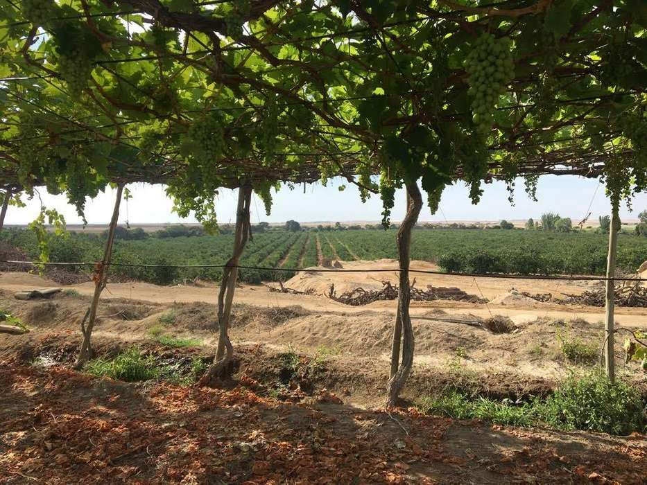 Venta de Fundo de 45 hectáreas de cítricos