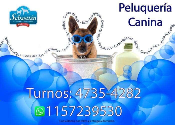 Peluquería canina - Turnos - Baños y cortes de raza