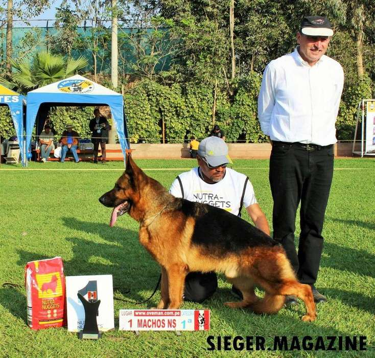 Cachorra Pastor Aleman Full Pedigree