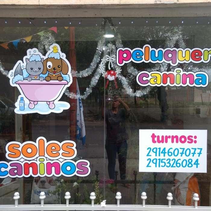Peluquería Canina!!