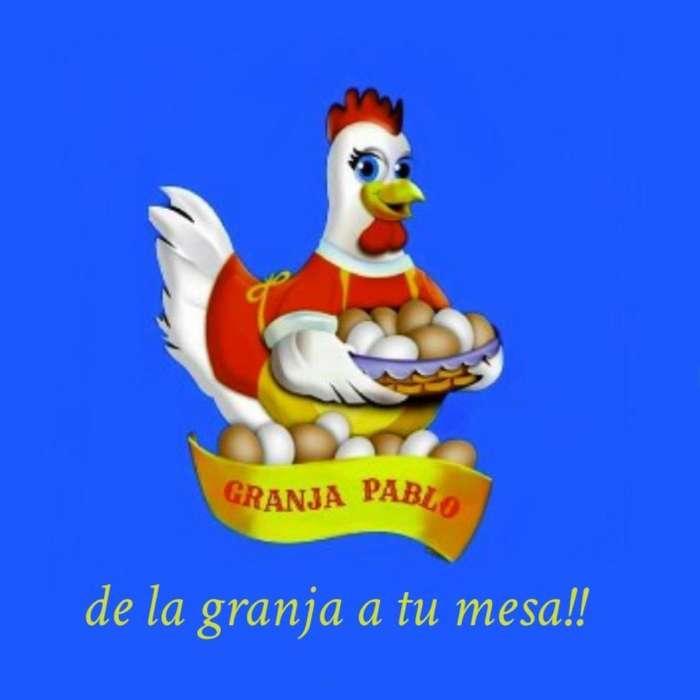 Venta de <strong>gallinas</strong> Coloradas por Mayor