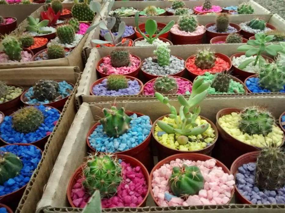 Cactus y Suculentas en medellin