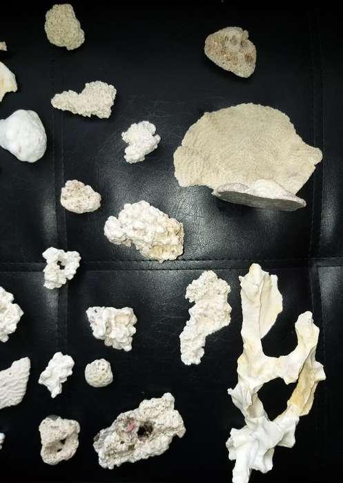 Corales Adorno para Acuario