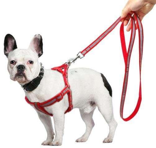 Collar Arnés <strong>perro</strong> Ajustable Alta Calidad Todas las Tallas