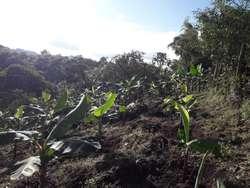 LOTE DE 5.000 MTS VIA FILANDIA - QUIMBAYA