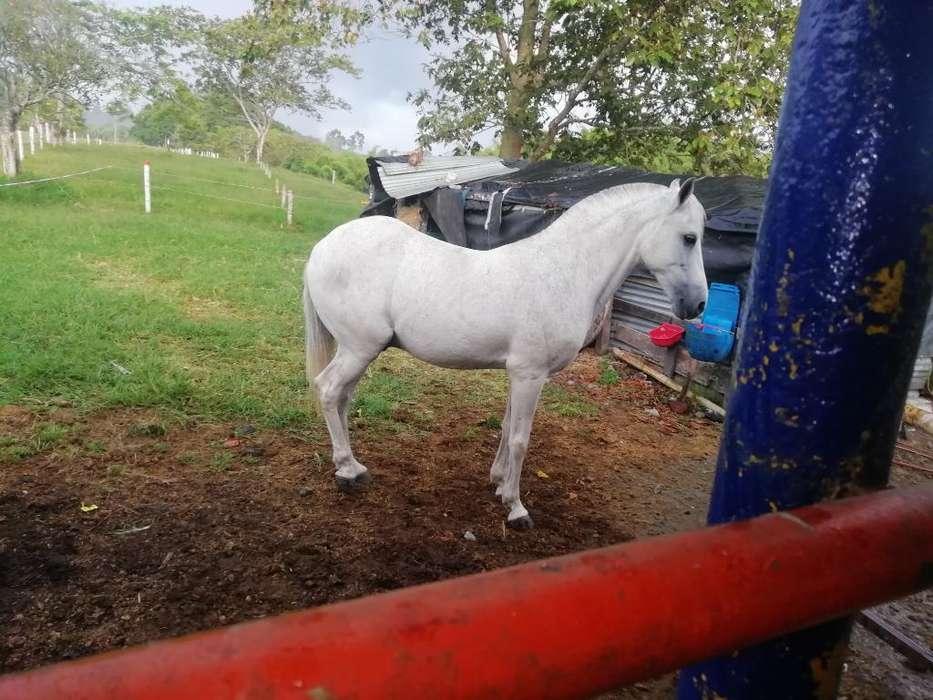 Vendo <strong>caballo</strong>
