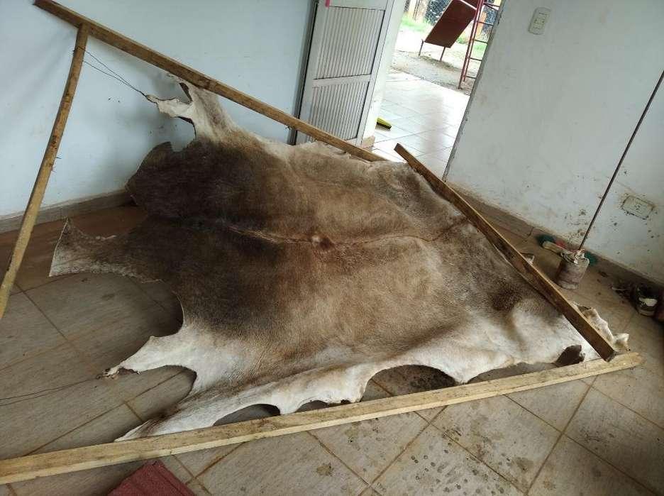 Vendo Cuero de Vaca con Pelo Estaqueado