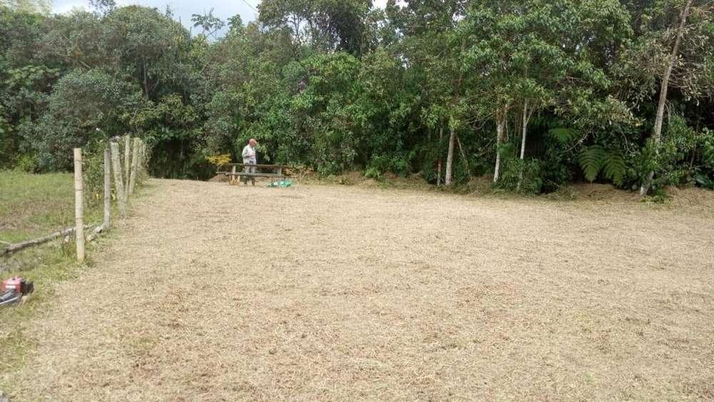 Lote en Venta Municipio de Filandia - wasi_1034976