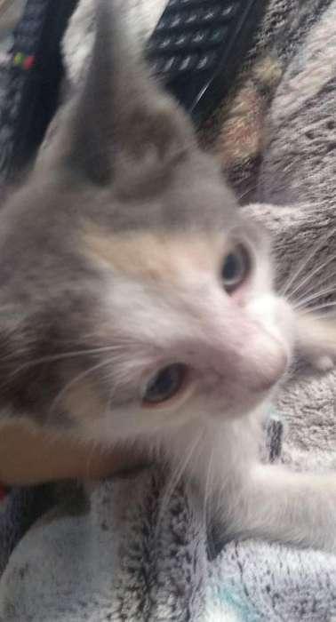 Se Da en Adopcion Gatitos