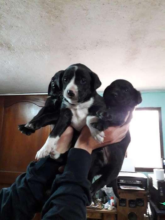Cachorritos en Adopcion